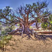 Utah Juniper On The Climb To Delicate Arch Arches National Park Art Print