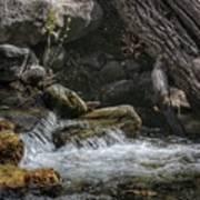 Utah Stream Art Print