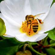 Vacaville Honey Bee Art Print