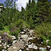 Vail Stream In The Summer 2 Art Print