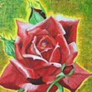 Valentine Rose  Art Print