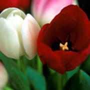 Valentine Tulips Art Print