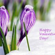 Valentines Day Crocuses Art Print