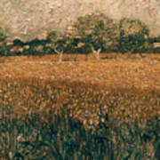 Van Gogh: Arles, 1888 Art Print