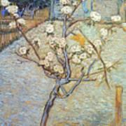 Van Gogh: Peartree, 1888 Art Print