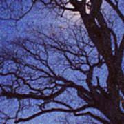 Van Gogh Tree Art Print