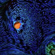 Van Gogh's Clam Art Print