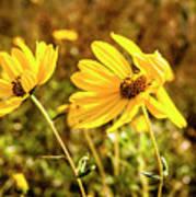 Variableleaf Sunflower Art Print