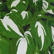 Variegated Hostas Art Print