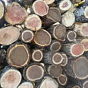 Various Firewood In The Round Art Print