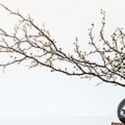 Vase And Branch Art Print