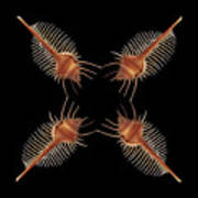 Venus Comb Geometric Art Print