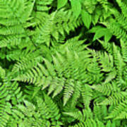 Verdant Ferns Art Print