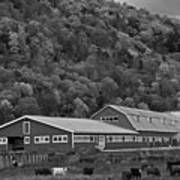 Vermont Farm With Cows Autumn Fall Black And White Art Print