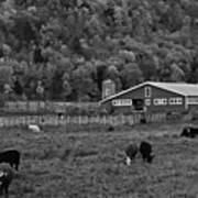 Vermont Farm With Cows Black And White Art Print