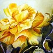 Vernon's Rose Art Print