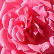 Very Pink Mini Art Print