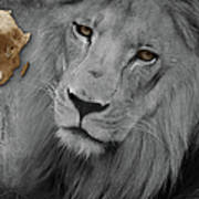 Very Sad Lion, Cry For Africa Art Print