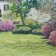 Veterans Park Blossoms Art Print