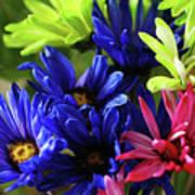 Vibrant Chrysanthemums Art Print