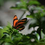 Vibrant Colors To A Orange Oak Tiger Butterfly Art Print