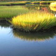 Vibrant Marsh Grasses Art Print