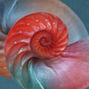 Vibrant Nautilus Pair - Horizontal Art Print