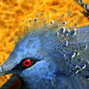 Victoria Crowned Pigeon Close Up Art Print