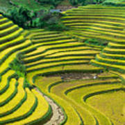 Vietnam Rice Terraces Art Print