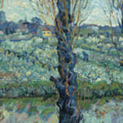 View Of Arles, Flowering Orchards Art Print