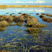View Of The Marsh Art Print