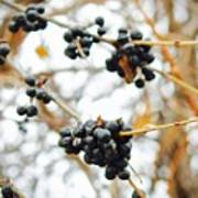 Vignettes - Indigo Winter Berries Art Print