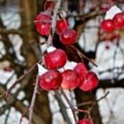 Vignettes - Snow Fruit Art Print