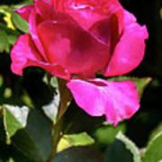 Vincent Red Rose Art Print