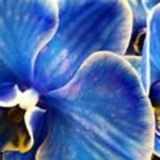 Vincent's Orchid Art Print