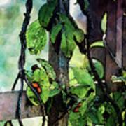 Vine And Trellis Digital Watercolor 4472 W_2 Art Print