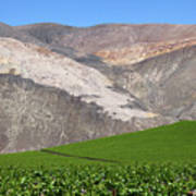 Vineyards In The Atacama Desert Chile Art Print