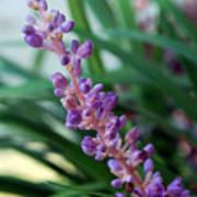 Vines Of Purple Art Print