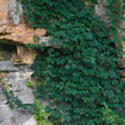 Vines On The Rocks Art Print
