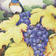 Vineyard Blue Art Print