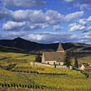 Vineyard In Alsace, France Art Print