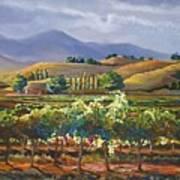 Vineyard In California Art Print