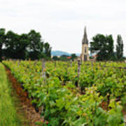 Vineyard In France Art Print