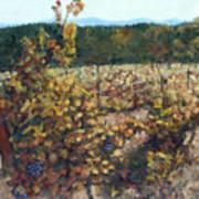 Vineyard Lucchesi Art Print