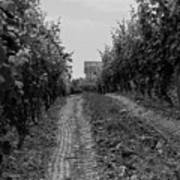 vineyard of old BW Art Print