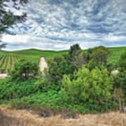Vineyard On Cloudy Day Art Print