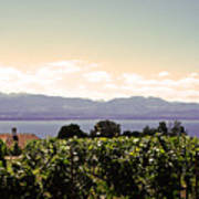 Vineyard On Lake Geneva Art Print