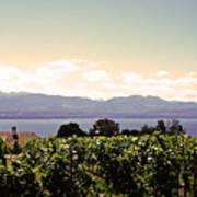 Vineyard On Lake Geneva Art Print