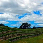 Vineyards In Paso Robles Art Print