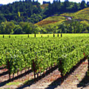 Vineyards In Sonoma County Art Print